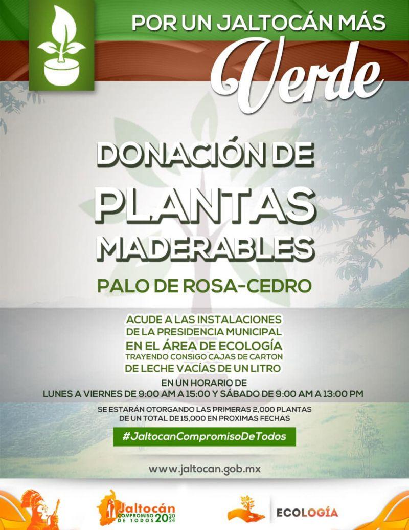 DONACIÓN DE PLANTAS MADERABLES